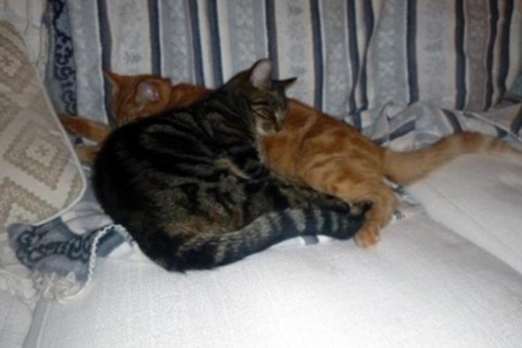 Sullivan and Aries asleep