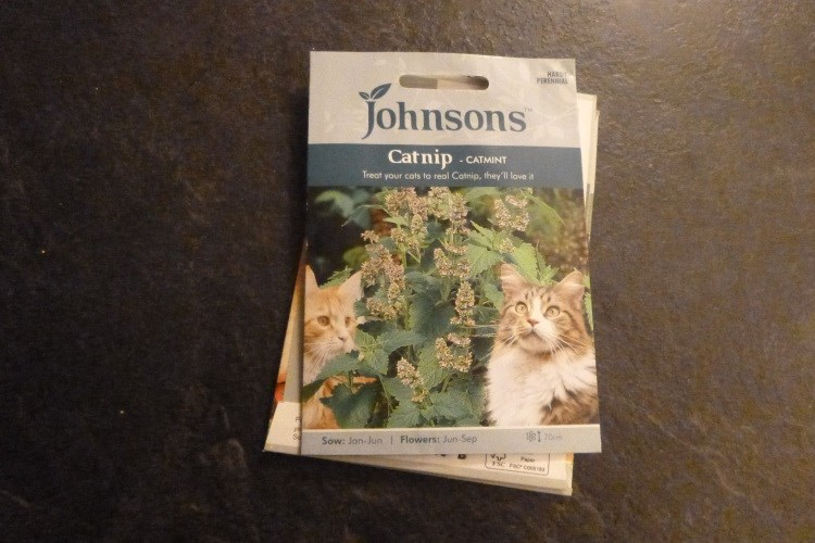cat nip seeds