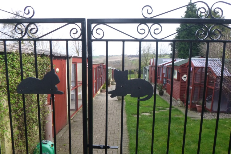 gate cats