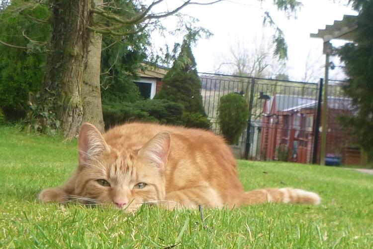 sullivan in grass